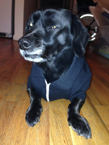 Snoopi, aka Prints, in his hoodie.